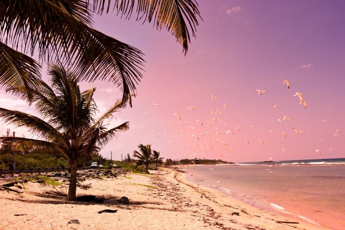 isla de vieques, puerto rico