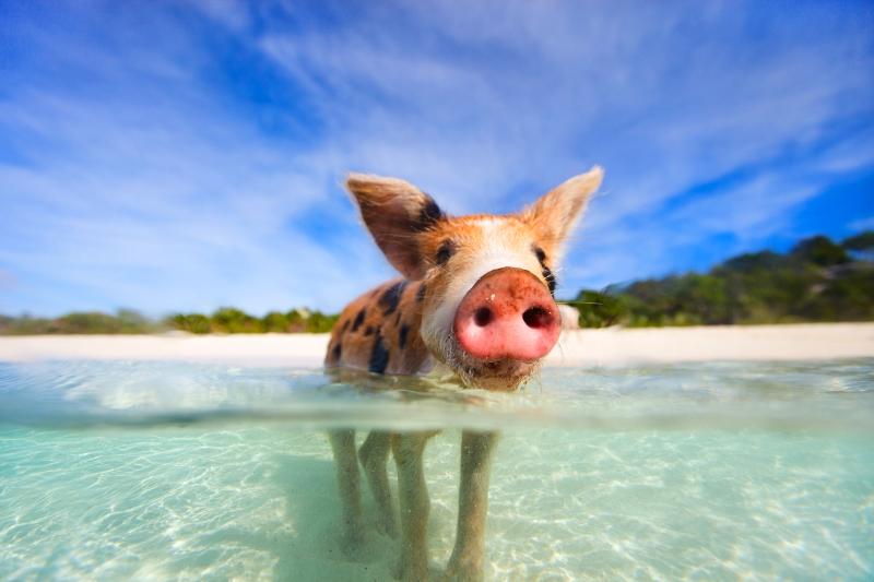 Bahamas holiday travel 2017