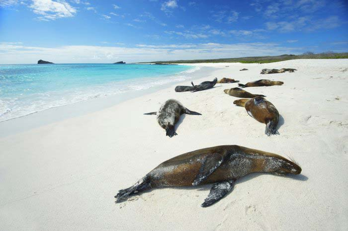 Seals on the beach in Galapagos
