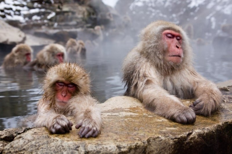 Monkeys in a spa, China